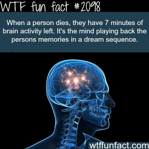 Wtf facts факты на английском
