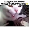 Животные из мира Инстаграм on Instagram