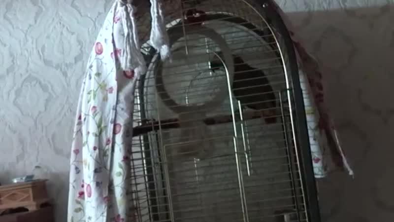 Попугис затыкает тупых личинусов.