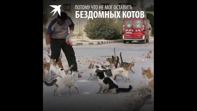В раздираемой войной Сирии спасают не только людей, но и кошек. И это, пожалу...