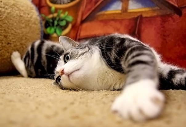 We love Cats : Группа по интересам. Животные : Одноклассники