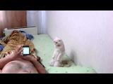 Ржачные ролики с животными 3! )))
