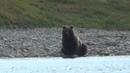 Чукотские медведи Встречи с Галкиной
