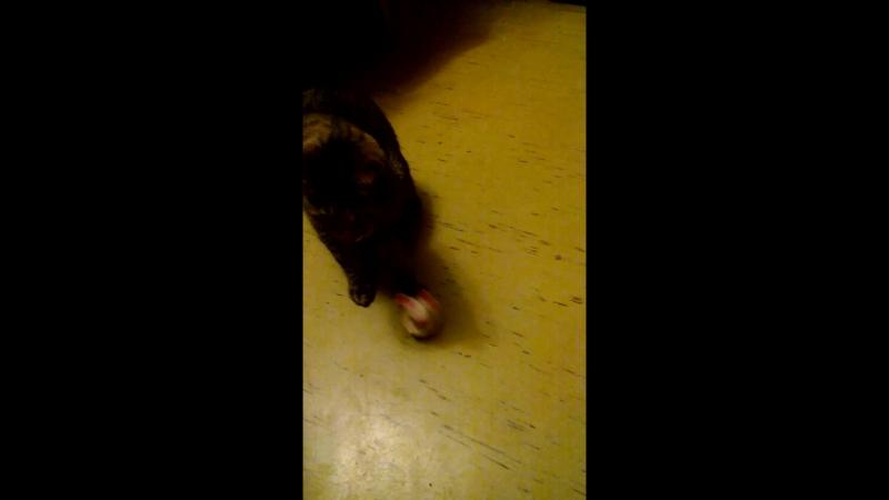 Эрэн играет с мышонком неваляшкой