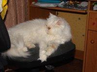 Кошечка Гордієнко, 5 января , Луга, id65942898
