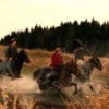 """♞ Конная база """"Чижик"""" (верховая езда, лошади)"""