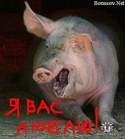 http://cs10005.vkontakte.ru/u62201575/106175341/x_7b38a259.jpg