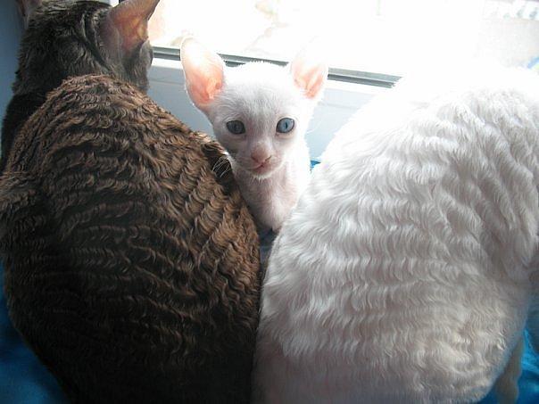 Феликс дайана и их котёнок хозяйка