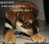 Миша Добрый, 15 июля 1988, Гомель, id78067764