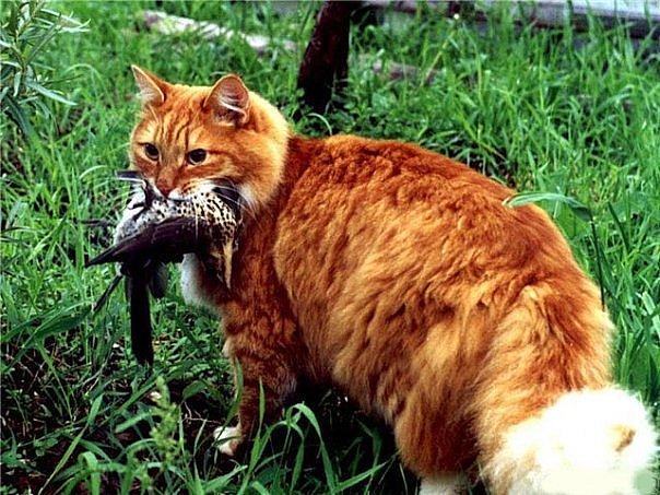 Коты воители - c41