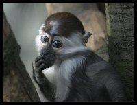 Funky Monkey, 12 октября 1992, Львов, id74879013