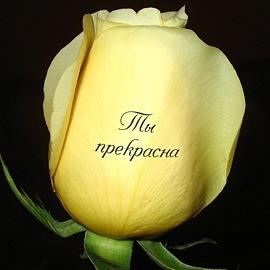 Цветы фото с пожеланиями