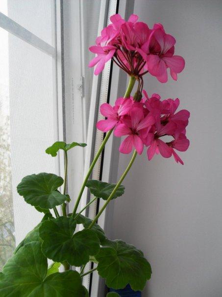 Что у вас сейчас цветёт дома?