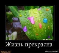 Orange Juice, 8 января 1988, Киев, id36590459