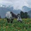 Конные походы по Горному Алтаю