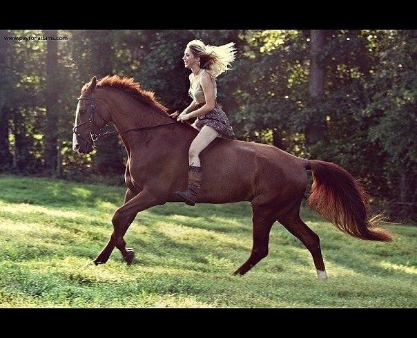 Порно бесплатно без регистрации horse