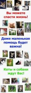 Минск. Помощь животным Фауны Города