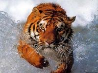 Семен Смольников, 9 декабря 1993, Чебаркуль, id106525542