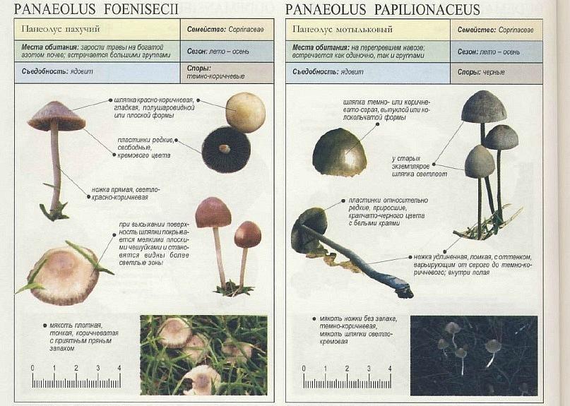 рынке как искать грибы псилоцибиновые петербург продажах есть бесшовное