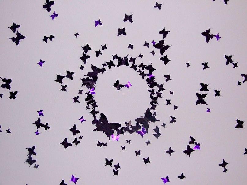 Знакомьтесь эти прекрасные бабочки