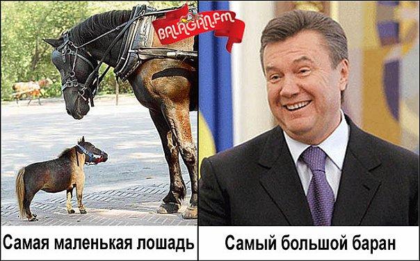 """""""Здесь Янукович не живет. Если бы знали где его дом, то сожгли бы. Он в Сочи живет или в Подмосковье"""", - в Ростове не нашли беглого экс-президента - Цензор.НЕТ 3530"""