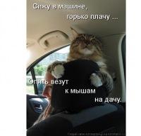 Сергей Мельников, 24 сентября , Мозырь, id68834288