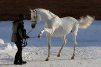 Ritko Horse