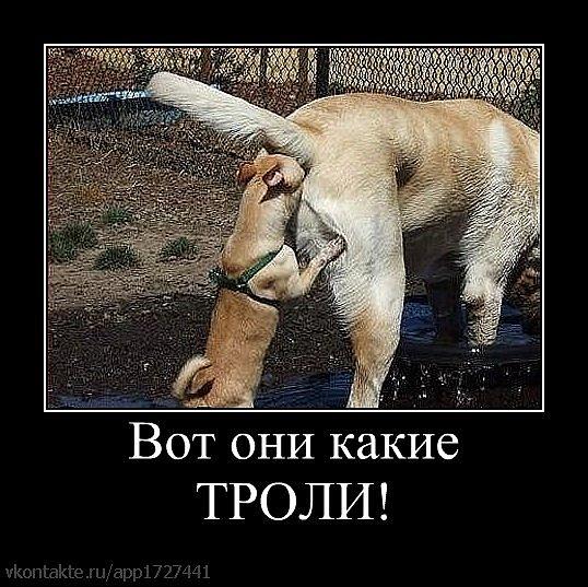 vse-snoshayutsya