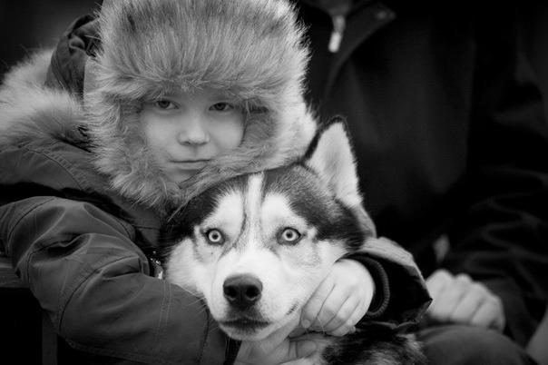 Сибирский хаски Сибирский хаски - северная ездовая собака, среднего...