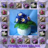 Комнатные цветы. черенки фиалок.