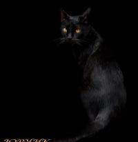 Чорний Кіт, Краснодар, id139679083