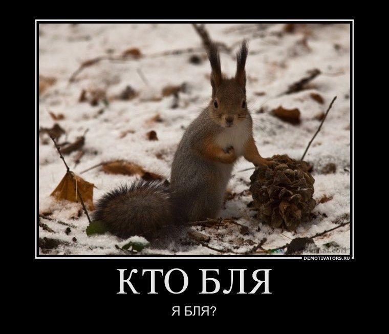 http://cs10149.vkontakte.ru/u1841110/138384935/y_cc600dba.jpg
