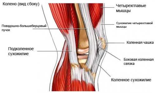 Разрыв каучукоподобных прокладок коленного сустава (мениск).