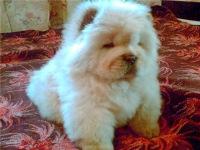 Танюшка Буханцова, 23 апреля 1991, Новосибирск, id107257245