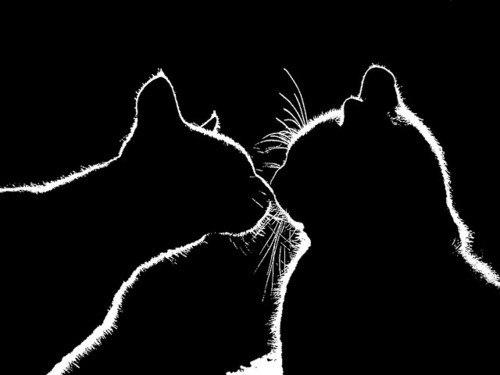 Кошки гораздо Схемы вышивки