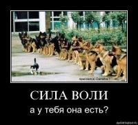 Дима Свит, 16 ноября , Киев, id128455349