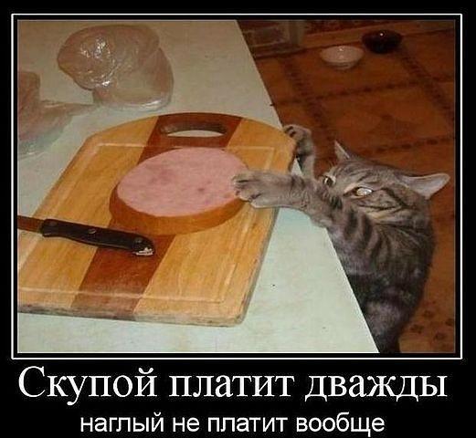 Удалось отвратить фото приколы кошки вальяжные ясно открыто сообщить