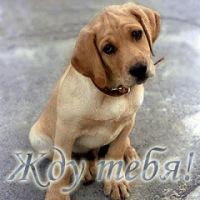 Альберт Газизуллин, 26 июля 1980, Уфа, id137167035