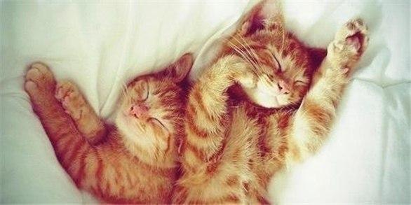 Картинки по запросу милые котики