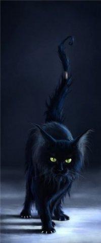 Как-то так, если коротенько.  Месяцы проходили один за другим, а кот, измученный, но не отчаявшийся, продолжал свои...