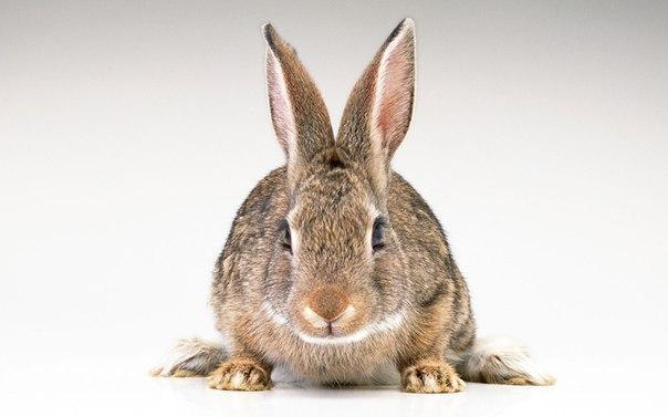 фото на мальова заїць
