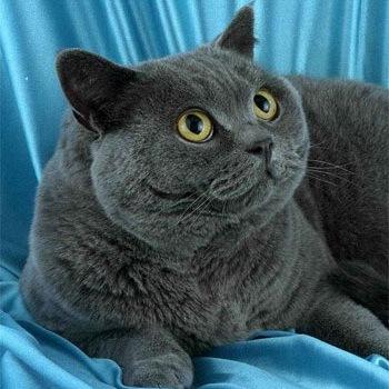 Фото животных фотографии Кошки животные картинки животный мир.