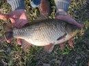...который находится на территории природноисторического парка Кузьминки-Люблино, весной 2012 года выпустят рыб.