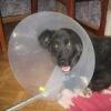 Помощь бездомным животным - Москва