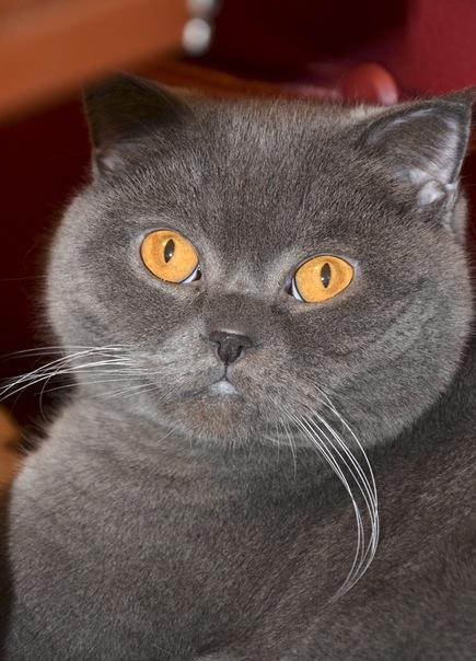 Породы кошек с фотографиями и названиями Каталог пород!