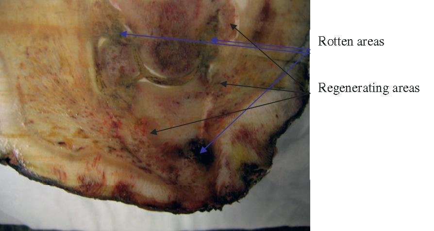 Нейротомия фото