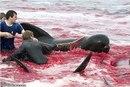 Уничтожение .  Спасите дельфинов.