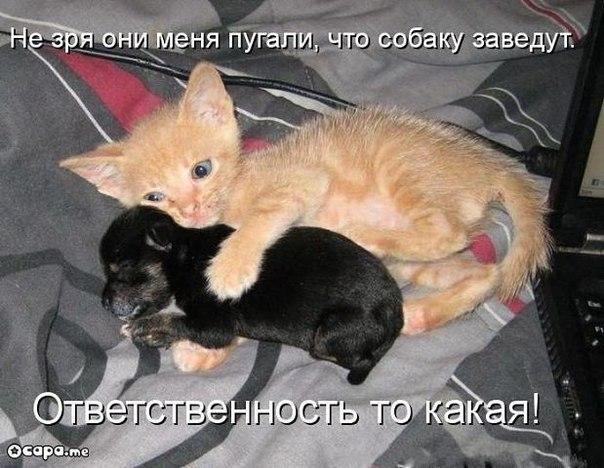 http://cs10226.userapi.com/u5393096/-14/x_c92bd49e.jpg
