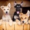 """""""Дарящие надежду"""" - Фонд помощи животным"""