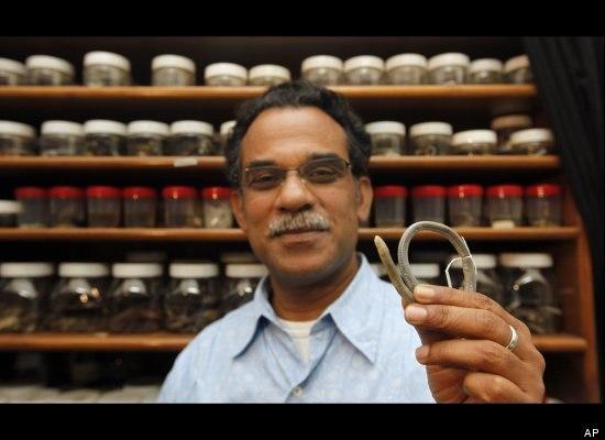 Новый вид червяги из Индии X_7277a40c